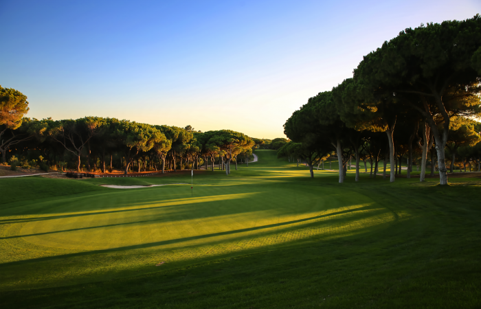 Green with flagstick surrounded by pine trees in the Dom Pedro Old Course