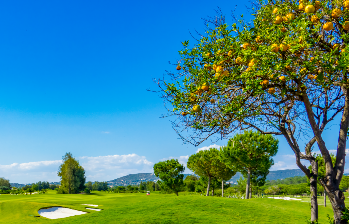 Orange tree on the right side and Laranjal Golf course on the left side