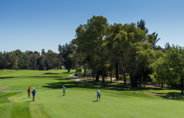 Four men in the Penina course green