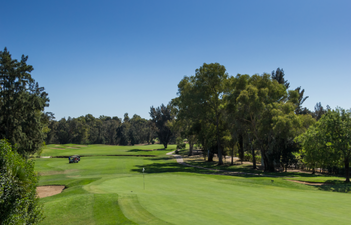 Green of the Penina Golf course