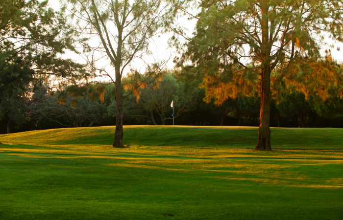 Green in the Alto Golf Course surrounded by pine trees
