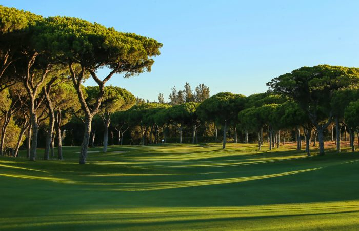 Pine trees surrounding the Dom Pedro Millennium Golf Course