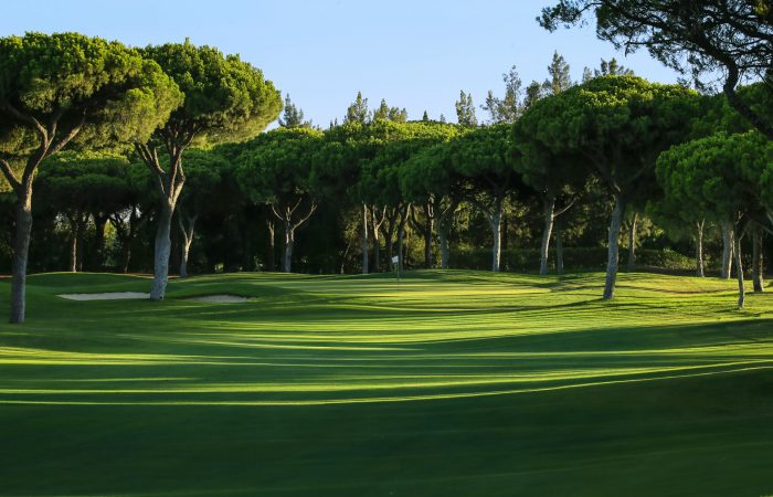 Green with flagstick in the Dom Pedro Millennium Golf Course, surrounded by pine trees