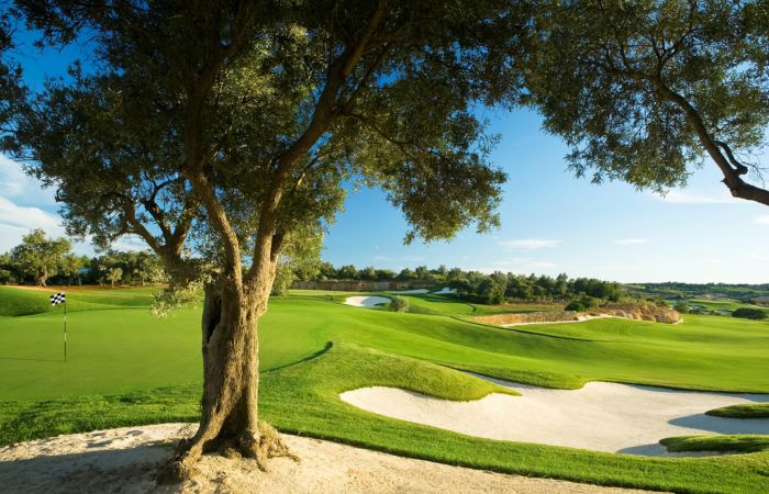Faldo Golf Course with olive tree, bunker in the right and green in the left