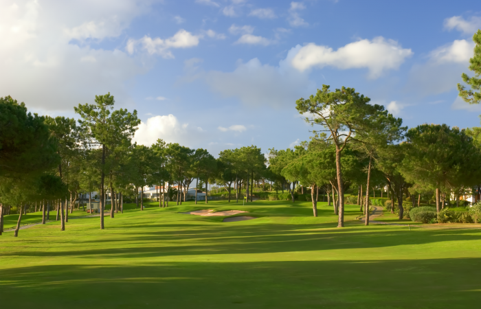 Green between the pine trees in the Pinheiros Altos Golf Course