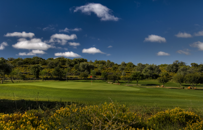 Green surrounded by olive trees in the Silves Golf Course